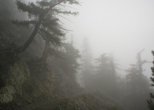 Hiking trail and fog